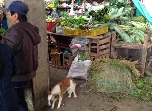 Dogs like the market, too!